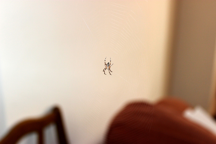 como evitar que las arañas entren a tu hogar