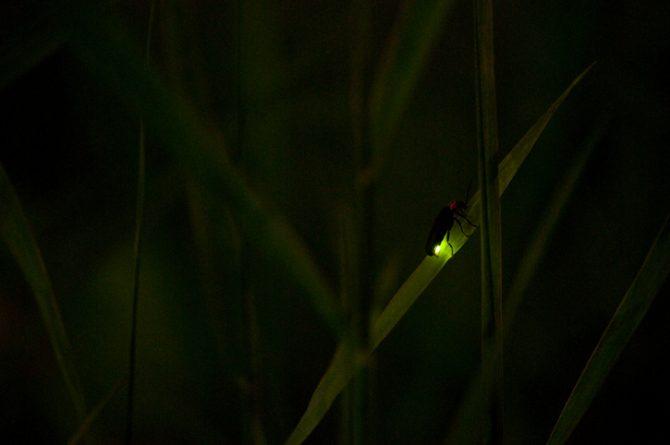 consejos para atraer luciérnagas al jardín