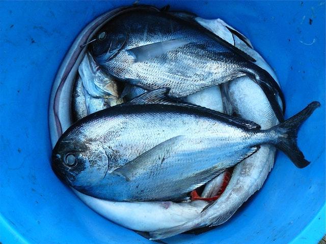 pescados dieta blanda