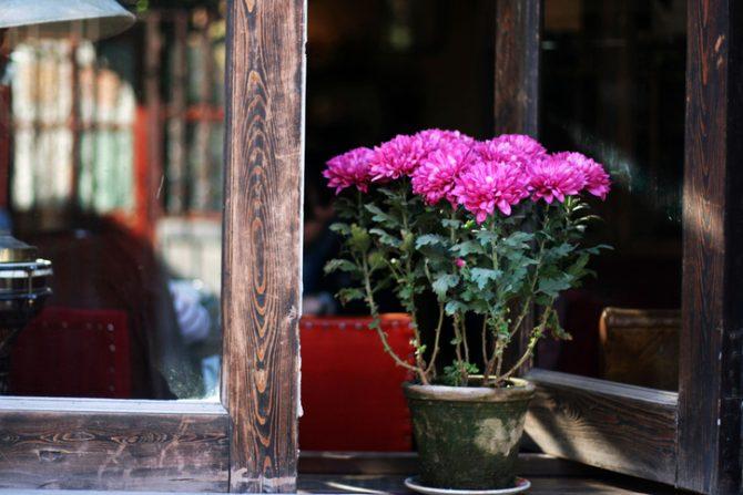 plantas que eliminan malos olores del baño