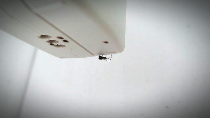 por qué las arañas son importantes en el hogar